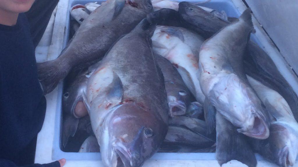 Tilefish fishing